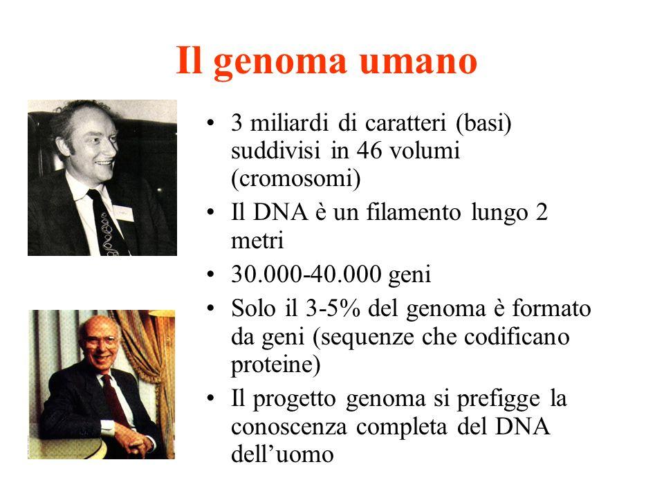 Il genoma umano 3 miliardi di caratteri (basi) suddivisi in 46 volumi (cromosomi) Il DNA è un filamento lungo 2 metri.
