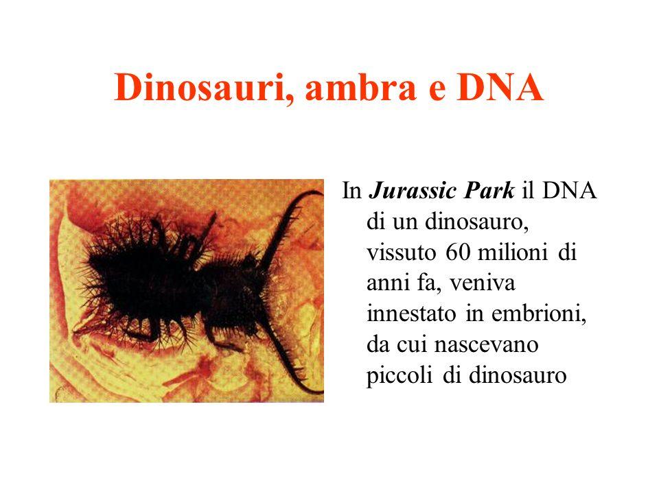 Dinosauri, ambra e DNA