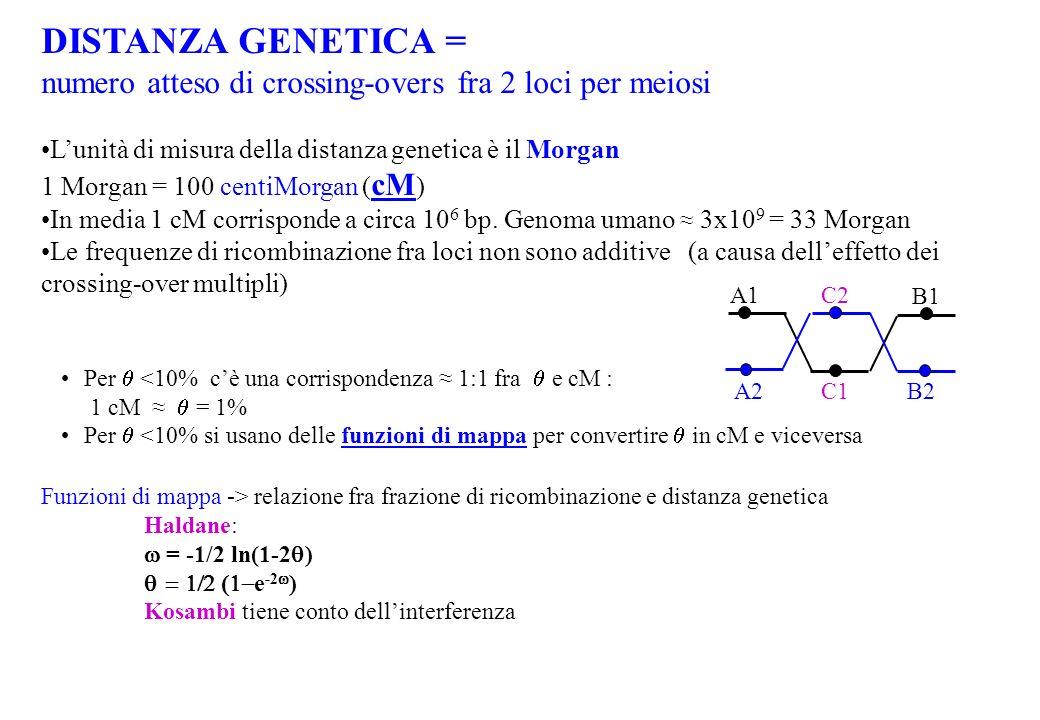 DISTANZA GENETICA = numero atteso di crossing-overs fra 2 loci per meiosi. L'unità di misura della distanza genetica è il Morgan.