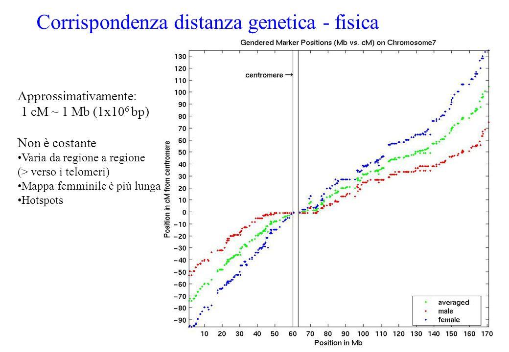 Corrispondenza distanza genetica - fisica