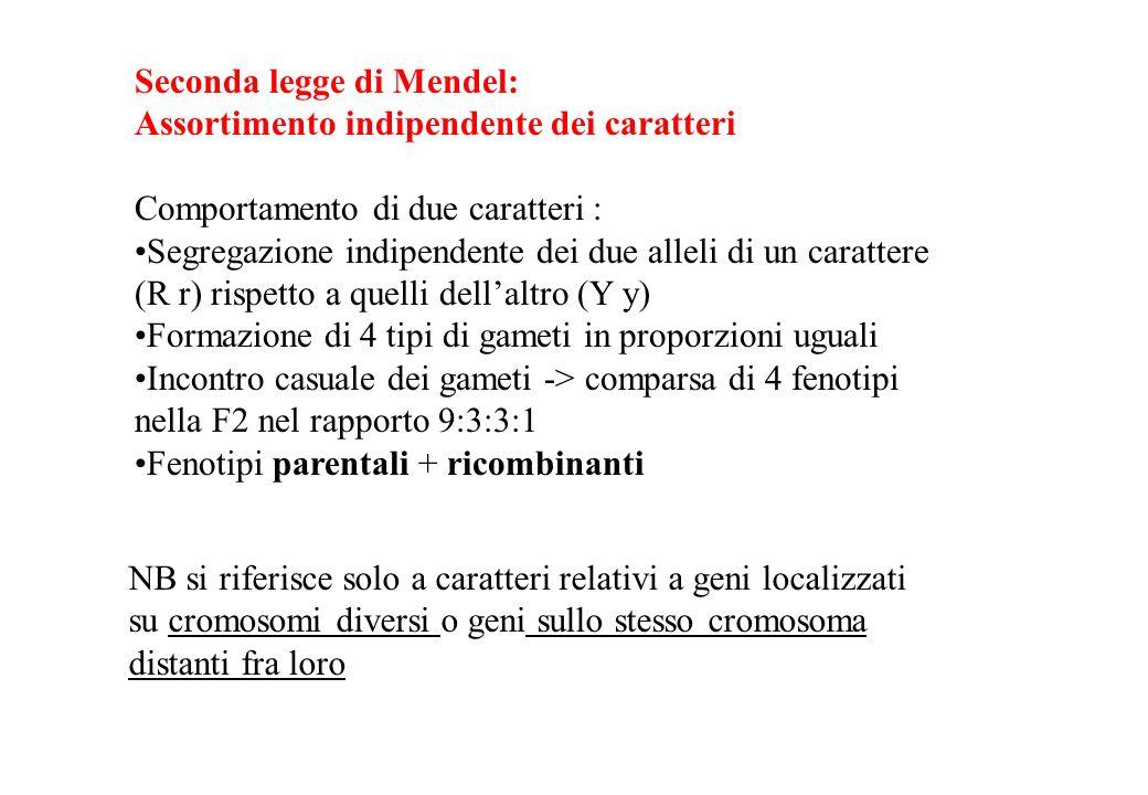 Seconda legge di Mendel: