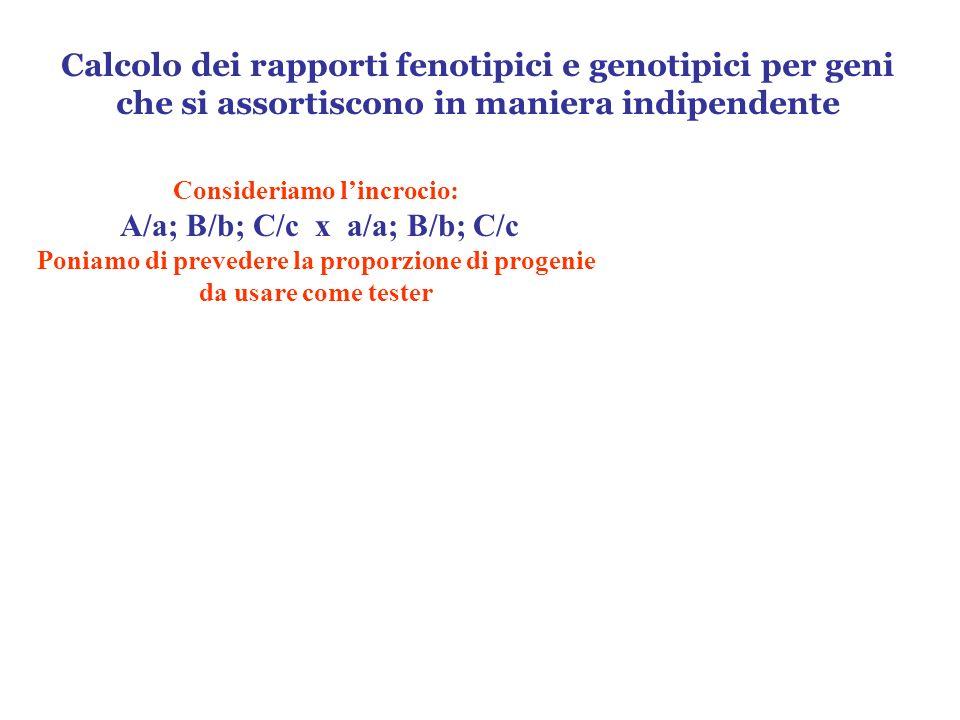 Calcolo dei rapporti fenotipici e genotipici per geni che si assortiscono in maniera indipendente