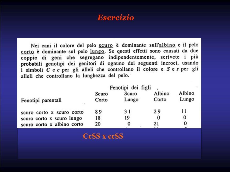 Esercizio CcSS x ccSS
