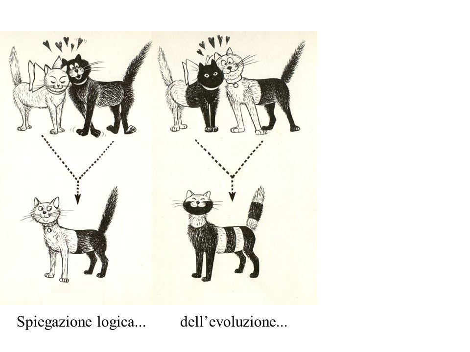 Spiegazione logica... dell'evoluzione...