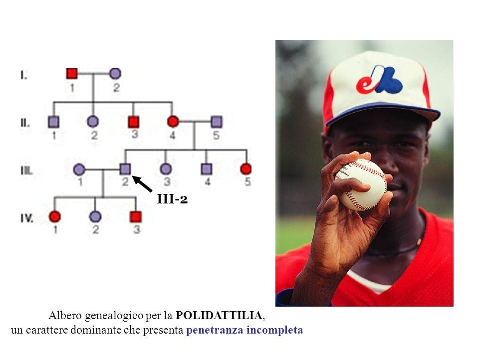 III-2 Albero genealogico per la POLIDATTILIA,