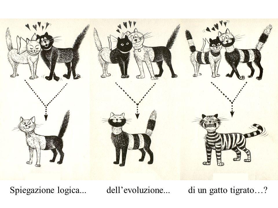 Spiegazione logica... dell'evoluzione... di un gatto tigrato…