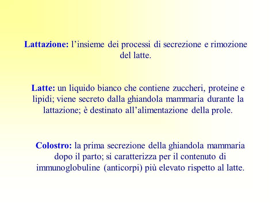 Lattazione: l'insieme dei processi di secrezione e rimozione del latte.