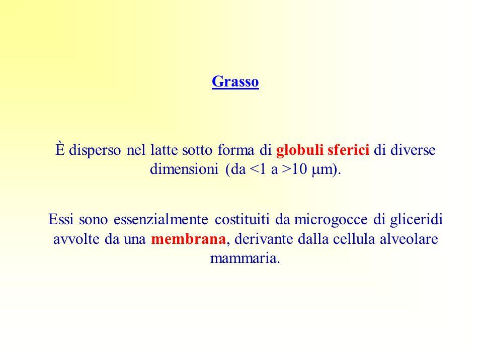 Grasso È disperso nel latte sotto forma di globuli sferici di diverse dimensioni (da <1 a >10 mm).