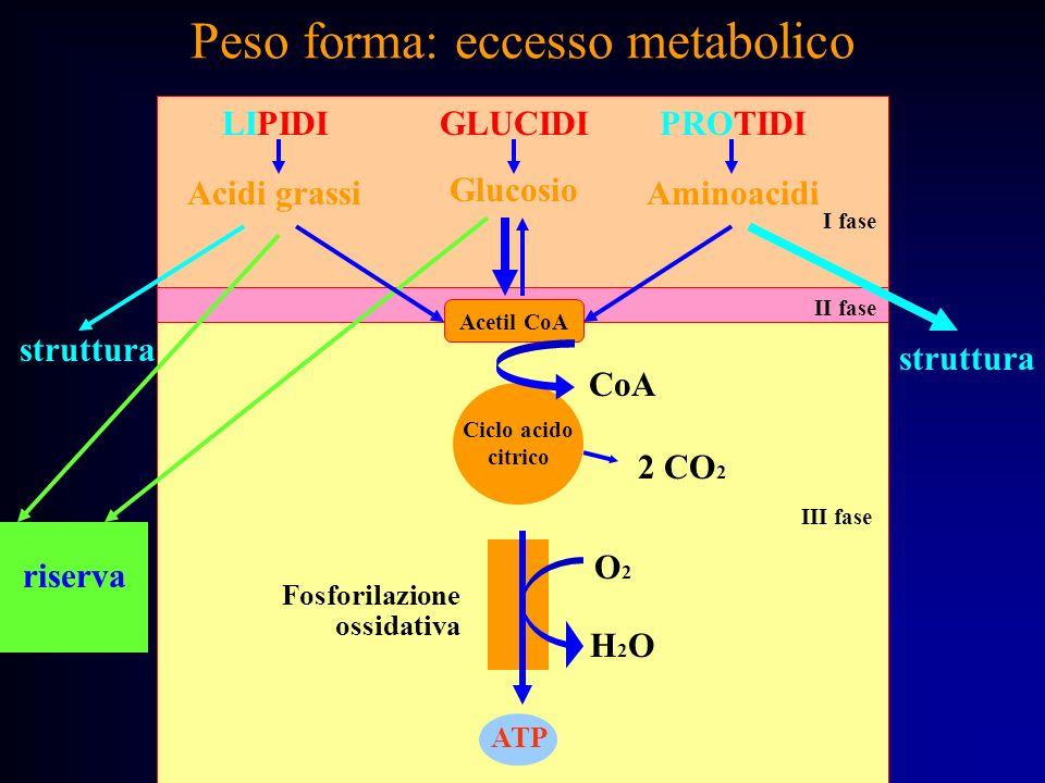 Peso forma: eccesso metabolico