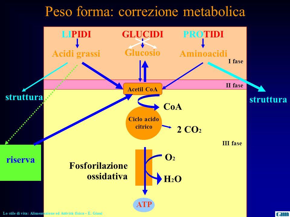 Peso forma: correzione metabolica