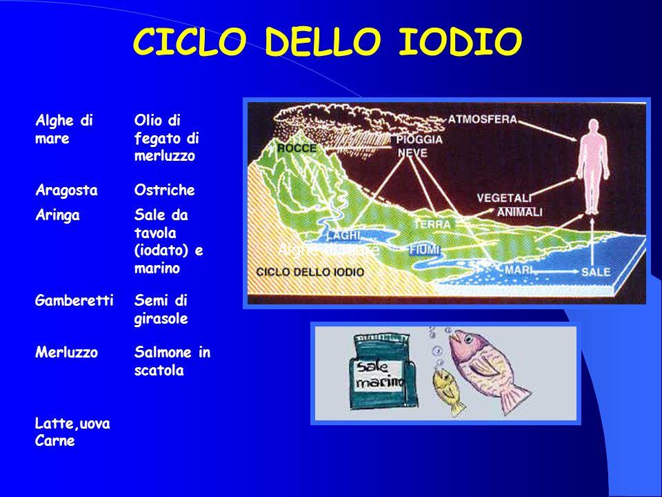 CICLO DELLO IODIO Alghe di mare Alghe di mare