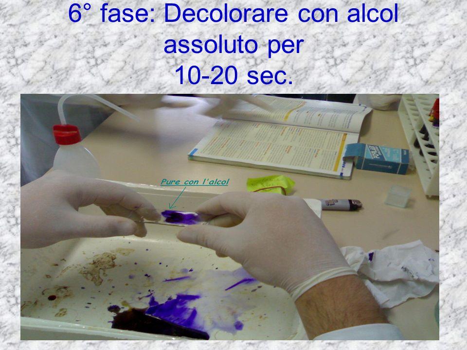 6° fase: Decolorare con alcol assoluto per 10-20 sec.