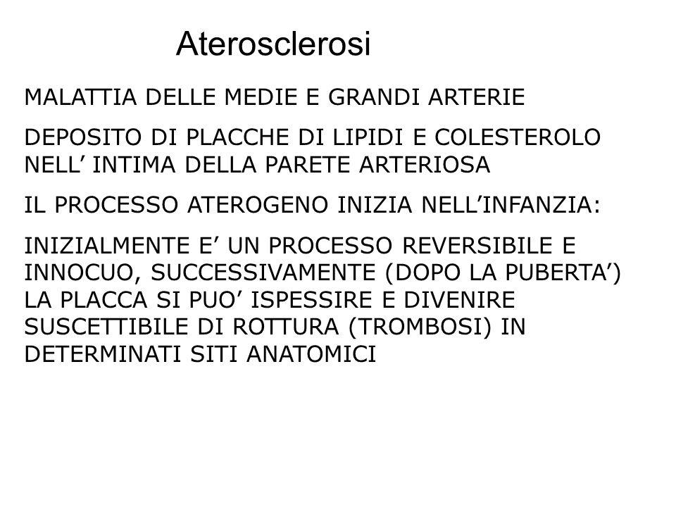Aterosclerosi MALATTIA DELLE MEDIE E GRANDI ARTERIE