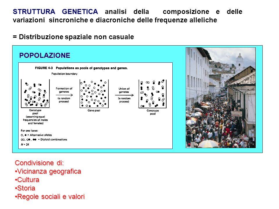 STRUTTURA GENETICA analisi della composizione e delle variazioni sincroniche e diacroniche delle frequenze alleliche