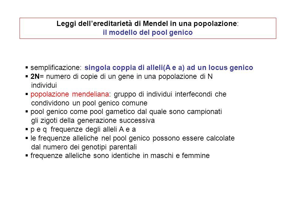 Leggi dell'ereditarietà di Mendel in una popolazione: