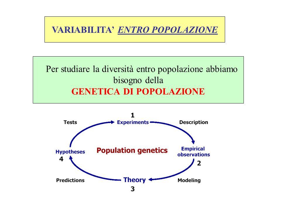 VARIABILITA' ENTRO POPOLAZIONE GENETICA DI POPOLAZIONE