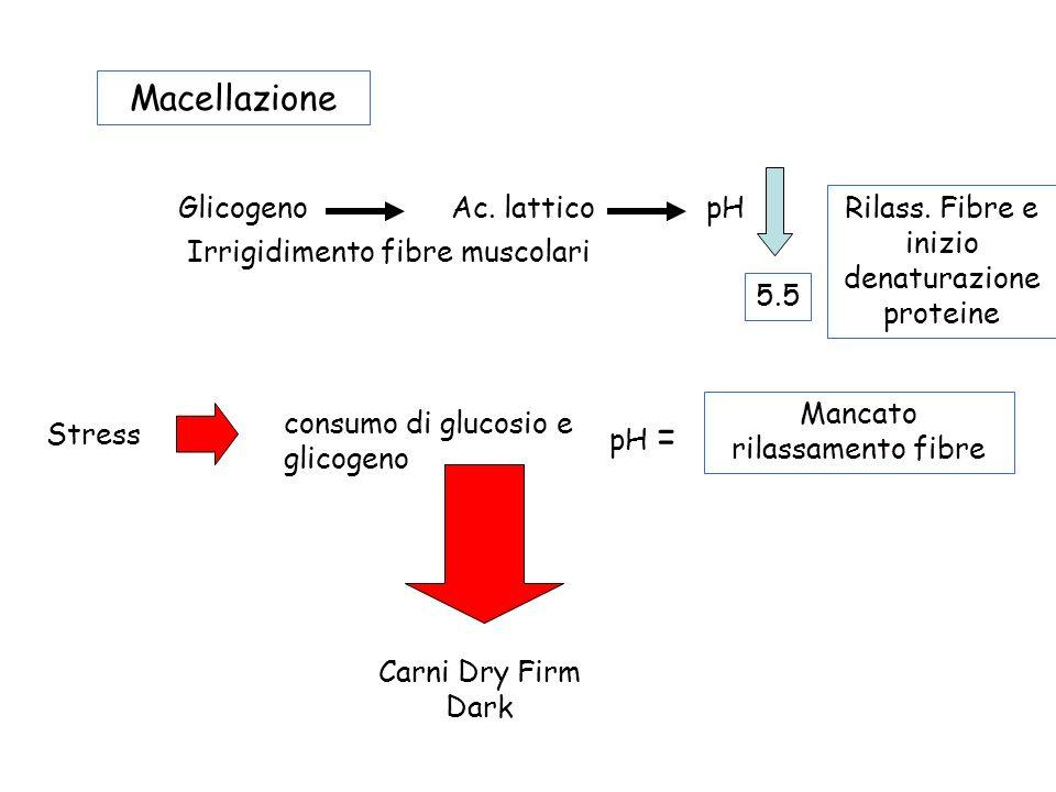 Macellazione Glicogeno Ac. lattico pH