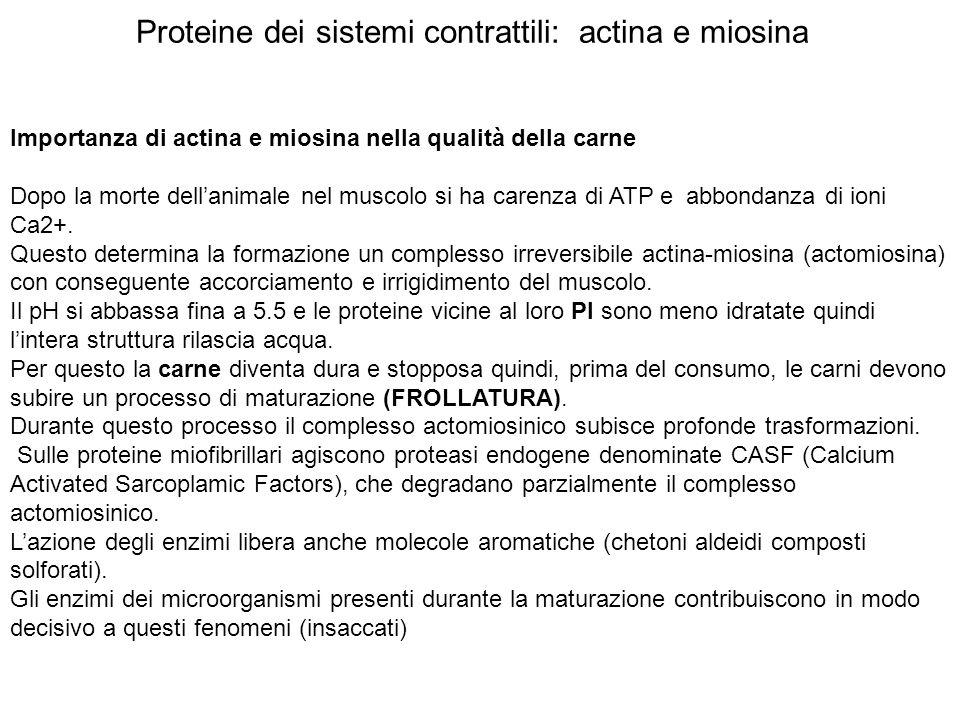 Proteine dei sistemi contrattili: actina e miosina