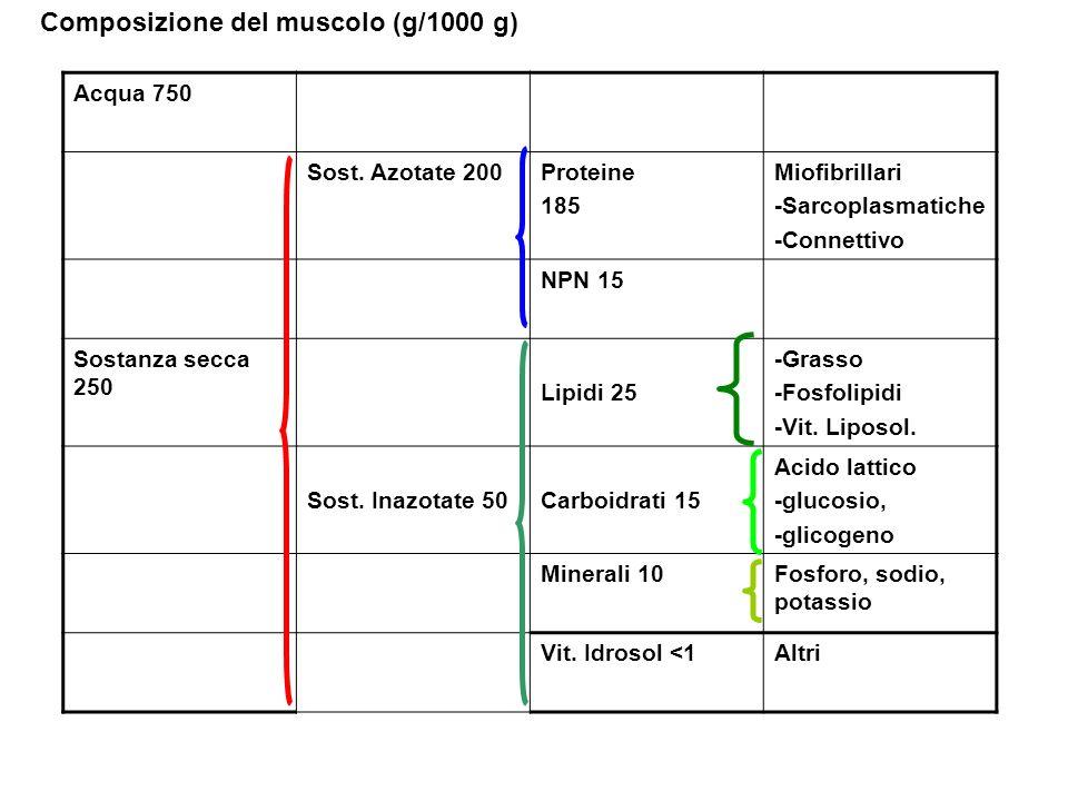 Composizione del muscolo (g/1000 g)