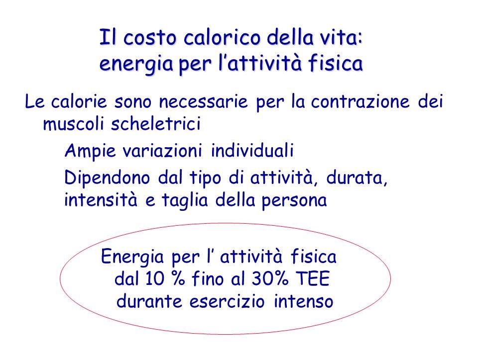 Il costo calorico della vita: energia per l'attività fisica