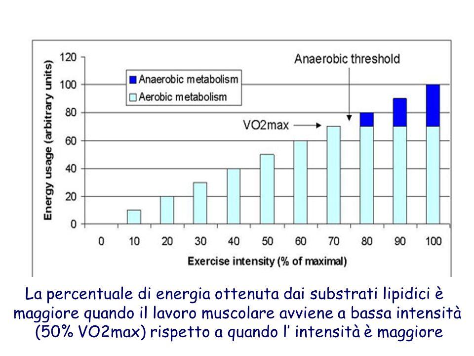La percentuale di energia ottenuta dai substrati lipidici è