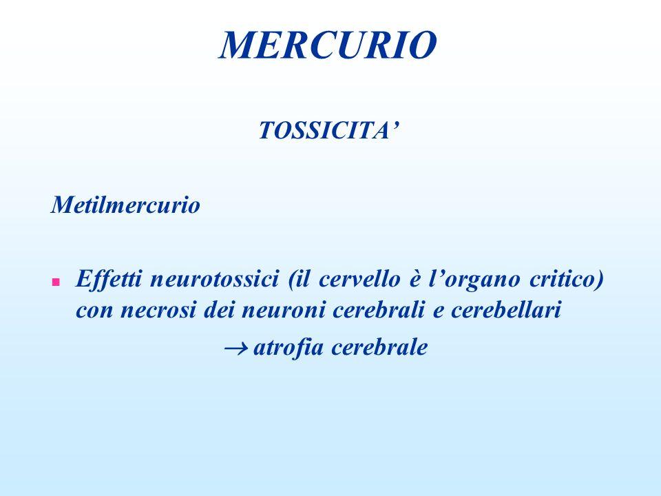 MERCURIO TOSSICITA' Metilmercurio