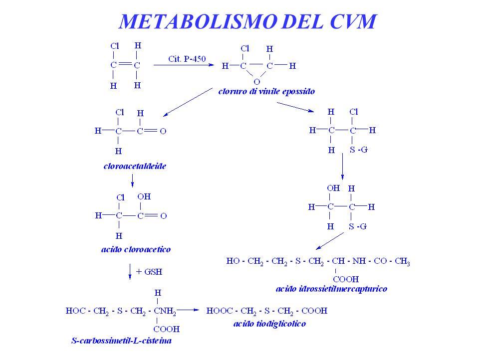 METABOLISMO DEL CVM