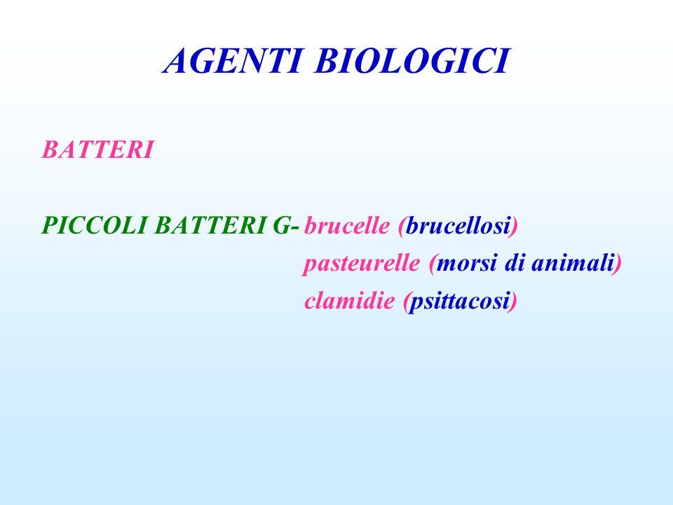 AGENTI BIOLOGICI BATTERI PICCOLI BATTERI G- brucelle (brucellosi)