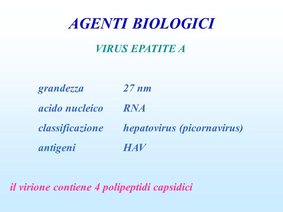 AGENTI BIOLOGICI VIRUS EPATITE A grandezza 27 nm acido nucleico RNA