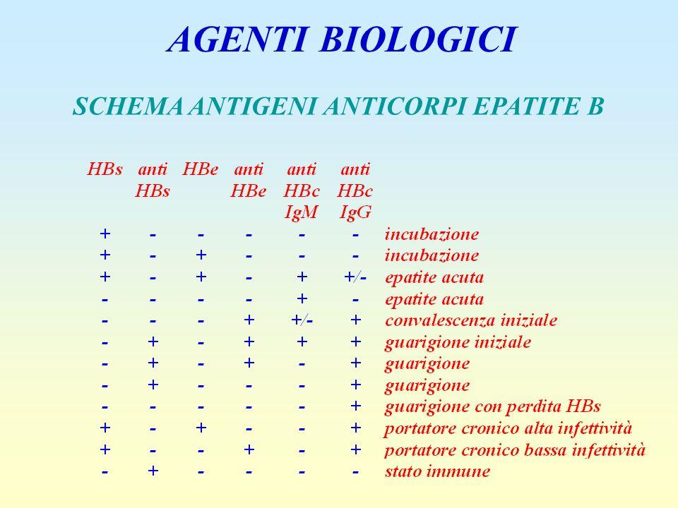 SCHEMA ANTIGENI ANTICORPI EPATITE B