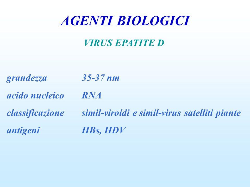 AGENTI BIOLOGICI VIRUS EPATITE D grandezza 35-37 nm acido nucleico RNA