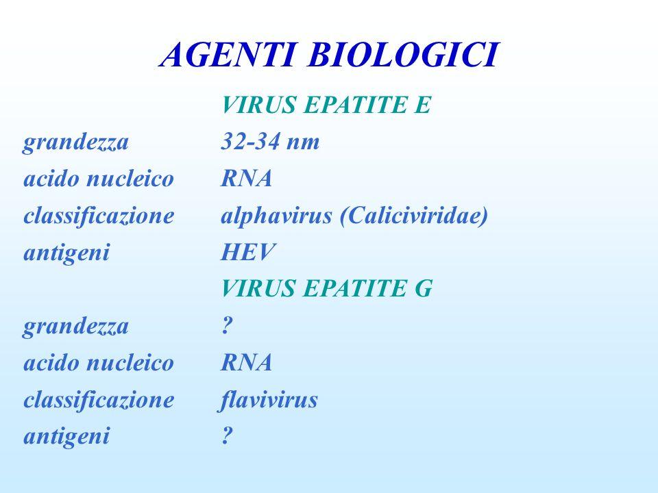 AGENTI BIOLOGICI VIRUS EPATITE E grandezza 32-34 nm acido nucleico RNA