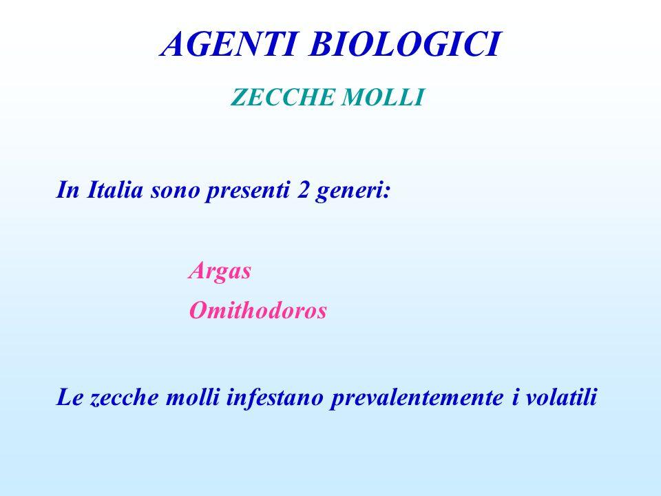 AGENTI BIOLOGICI ZECCHE MOLLI In Italia sono presenti 2 generi: Argas