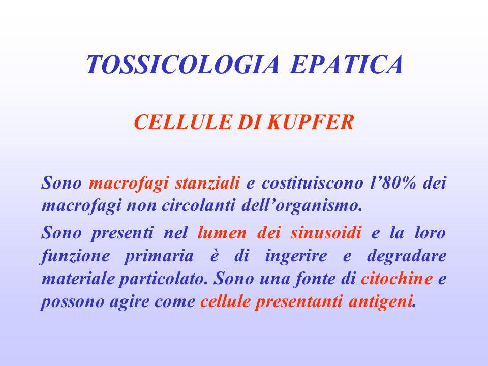 TOSSICOLOGIA EPATICA CELLULE DI KUPFER