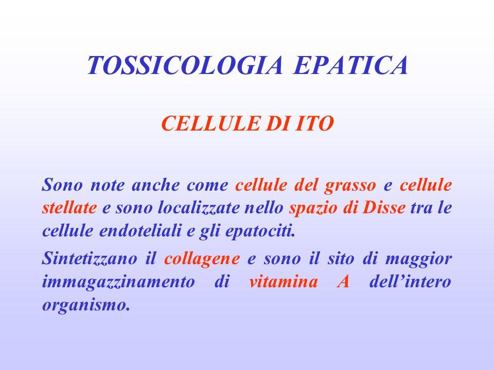 TOSSICOLOGIA EPATICA CELLULE DI ITO