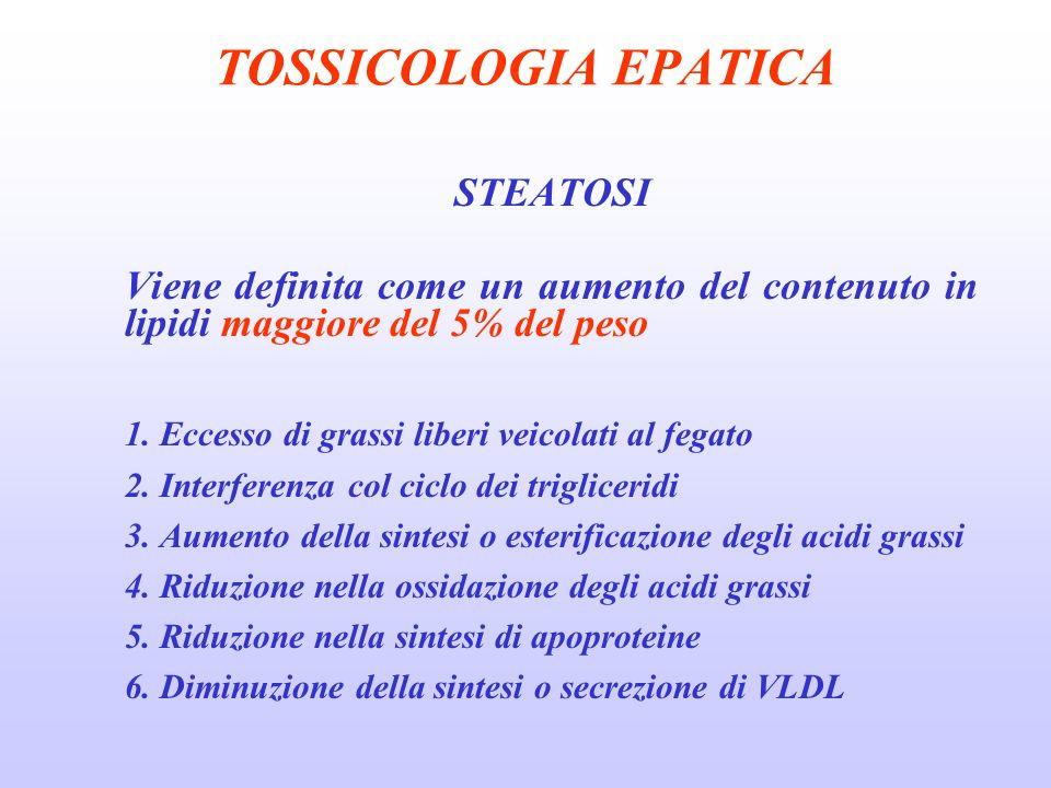 TOSSICOLOGIA EPATICA STEATOSI