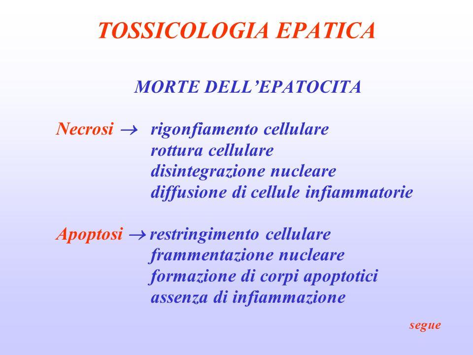TOSSICOLOGIA EPATICA MORTE DELL'EPATOCITA