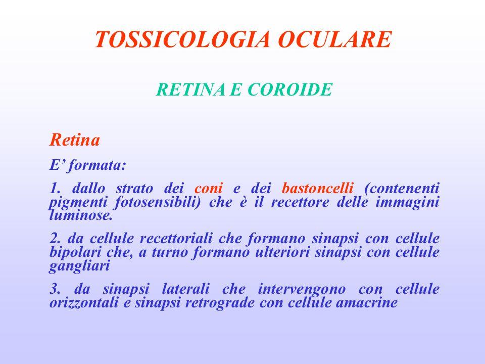 TOSSICOLOGIA OCULARE RETINA E COROIDE Retina E' formata: