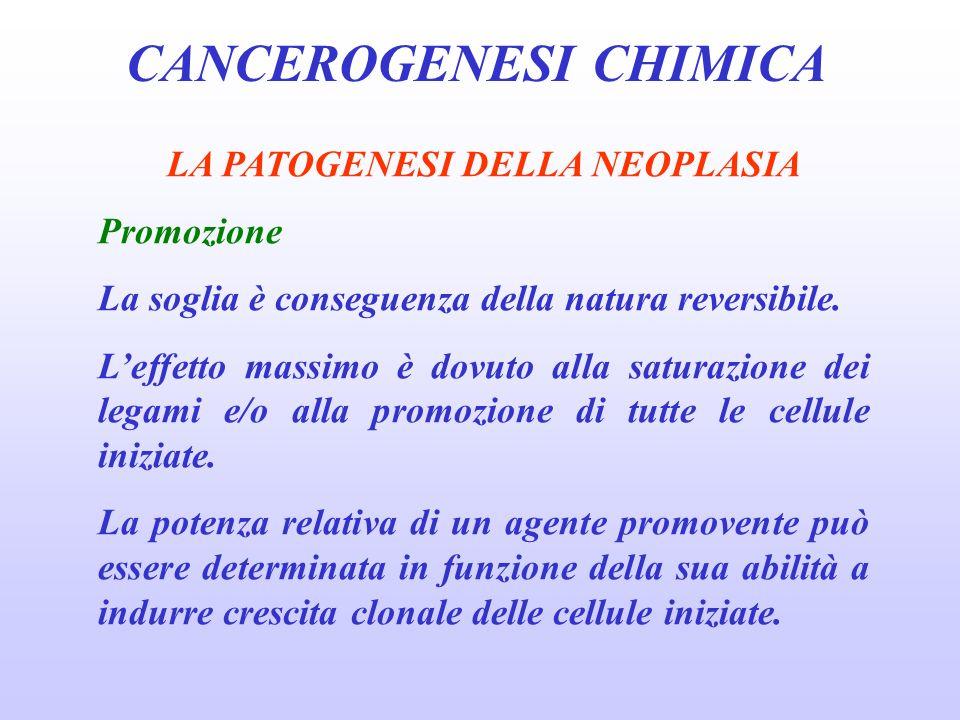 CANCEROGENESI CHIMICA LA PATOGENESI DELLA NEOPLASIA