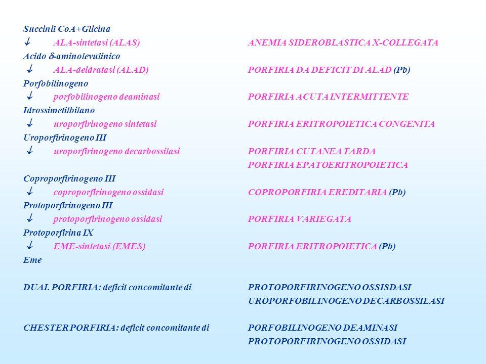 Succinil CoA+Glicina  ALA-sintetasi (ALAS) ANEMIA SIDEROBLASTICA X-COLLEGATA. Acido -aminolevulinico.
