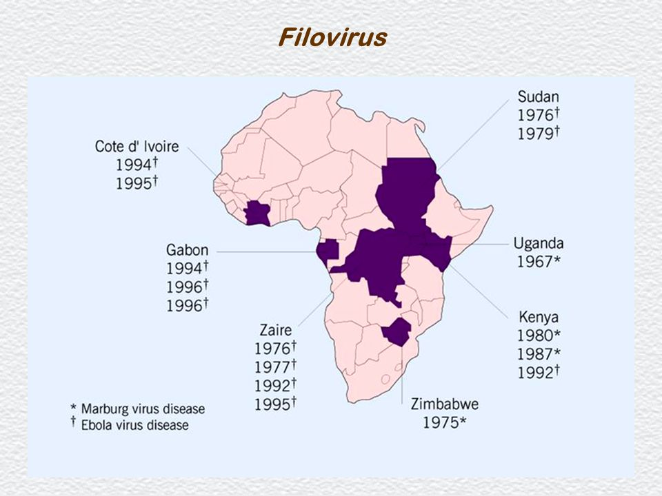 Filovirus