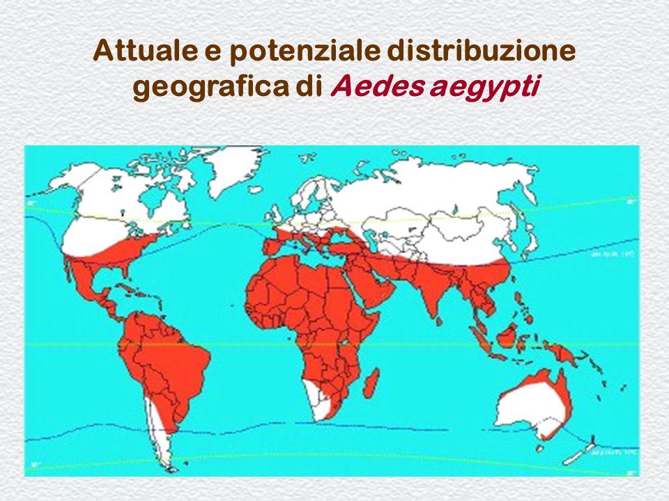 Attuale e potenziale distribuzione geografica di Aedes aegypti