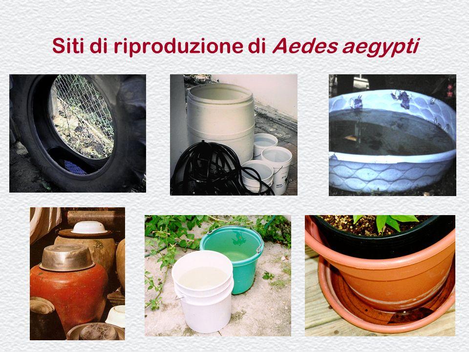 Siti di riproduzione di Aedes aegypti