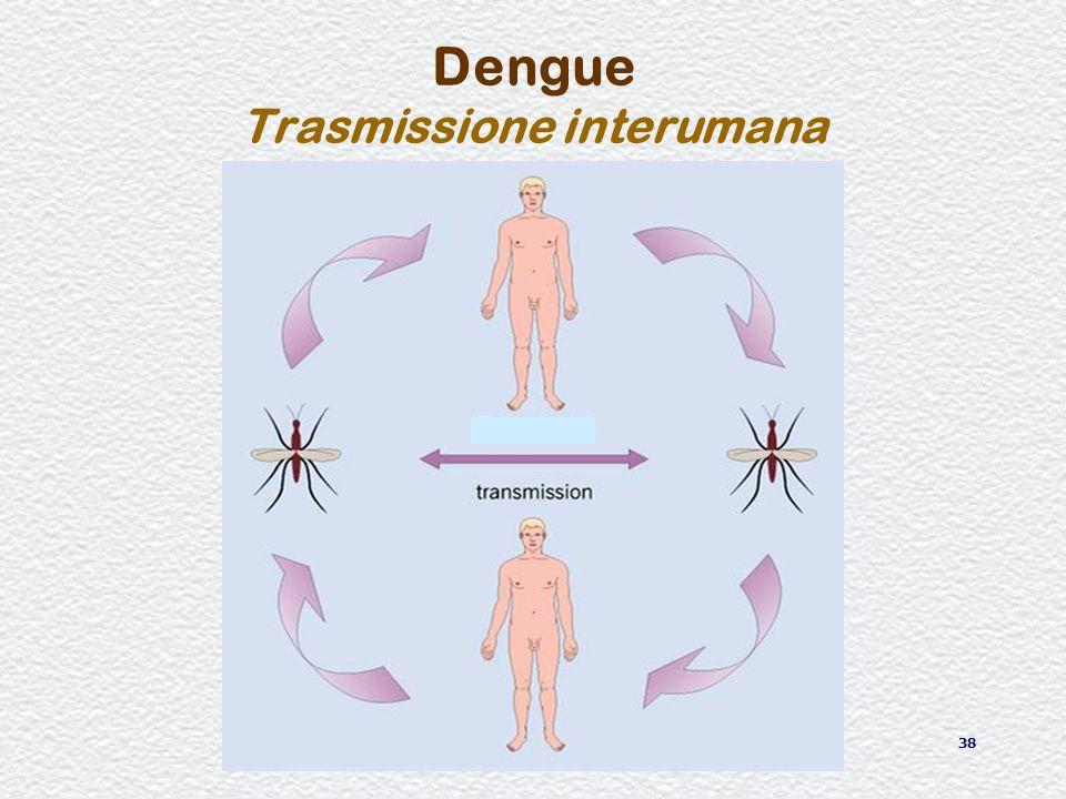 Dengue Trasmissione interumana