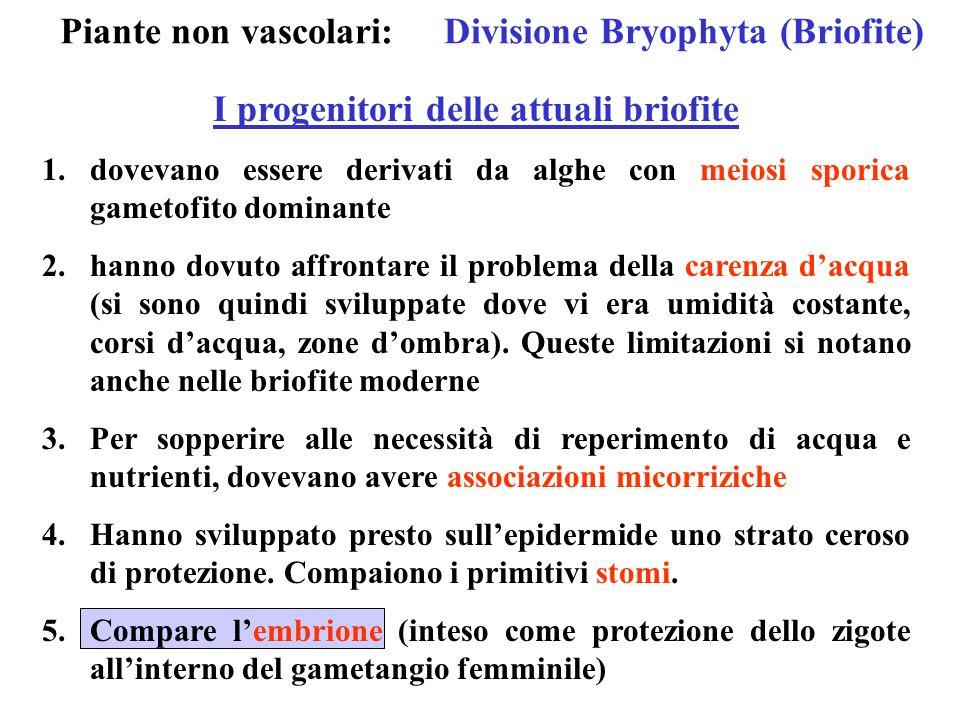 Piante non vascolari: Divisione Bryophyta (Briofite)
