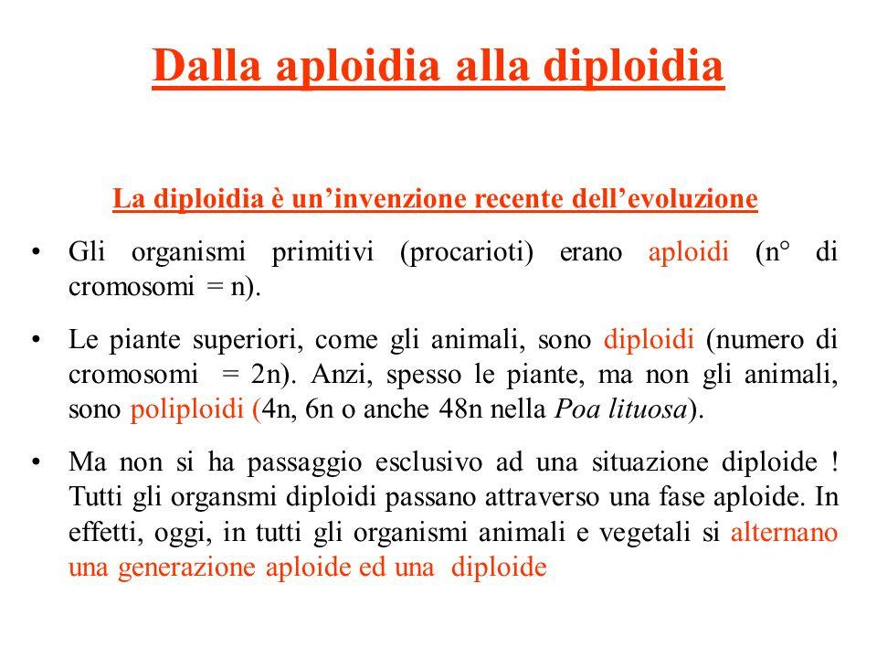 Dalla aploidia alla diploidia