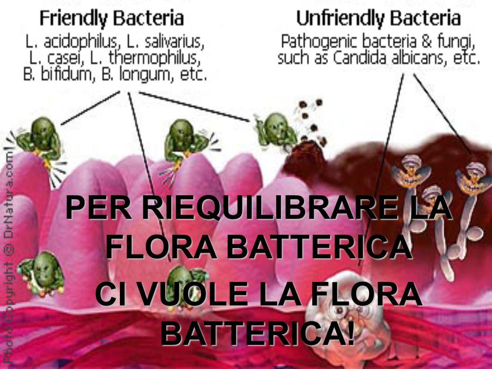 PER RIEQUILIBRARE LA FLORA BATTERICA CI VUOLE LA FLORA BATTERICA!