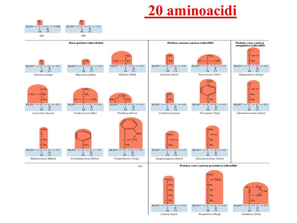 20 aminoacidi
