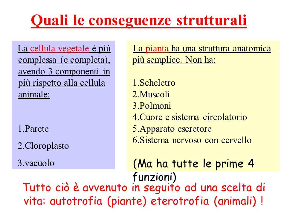 Quali le conseguenze strutturali