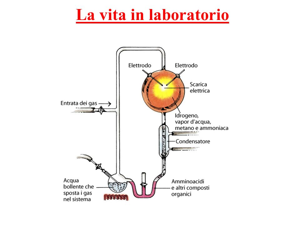 La vita in laboratorio